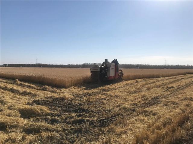 吉林市已完成粮食作物收获面积476.5万亩 第1张