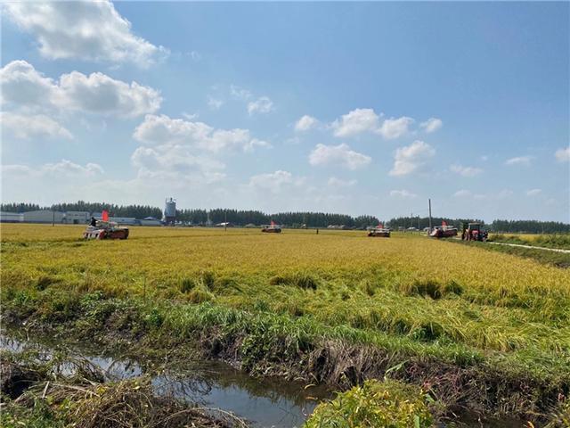 吉林市已完成粮食作物收获面积476.5万亩 第3张
