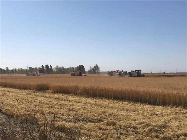 吉林市已完成粮食作物收获面积476.5万亩 第2张