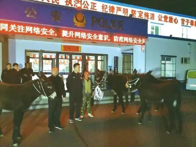 """五头毛驴在长春市中心""""游荡"""",警方竭尽全力寻找失主 第2张"""