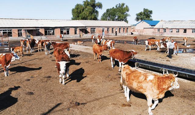 """全市畜牧业年产值预计达到554.4亿元,是价格安全、肉、蛋、奶优良的稳定""""菜篮子"""" 第1张"""