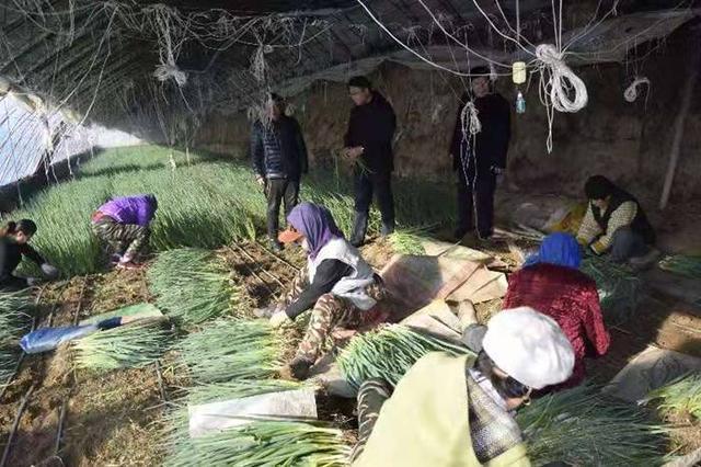 公主岭农业广播学校为怀德镇三里堡子村的小葱产业发展注入新的活力。 第1张