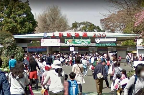 日本的大熊猫即将回家。日本上野动物园园长:香香找对象真好。 第2张