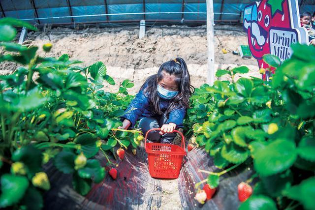 产值从187亿元增加到260亿元。园艺特色产业走出了一条奇妙的上升曲线。 第1张