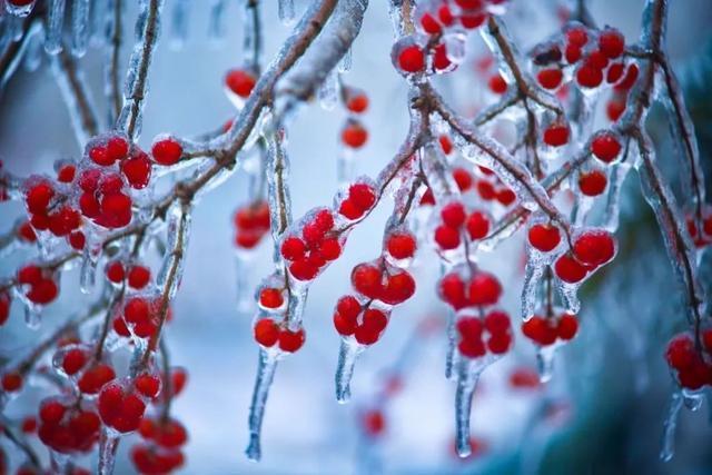 """长春的""""城市冰雪""""受到广州和杭州的欢迎。 第7张"""