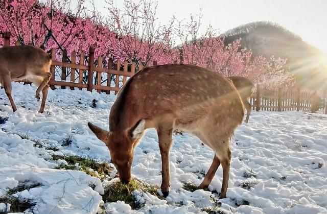嘿,天啊!有一个冰雪的童话世界等着你。 第7张
