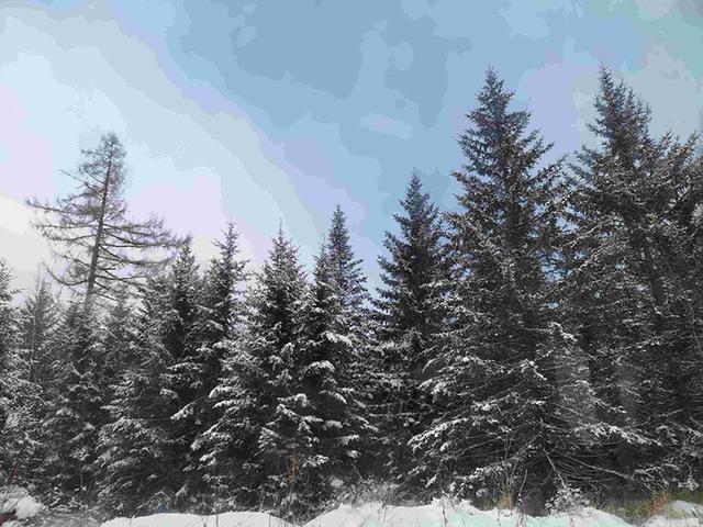 冰雪探险者④  享受长白山雾凇,享受冬日漂流。 第3张