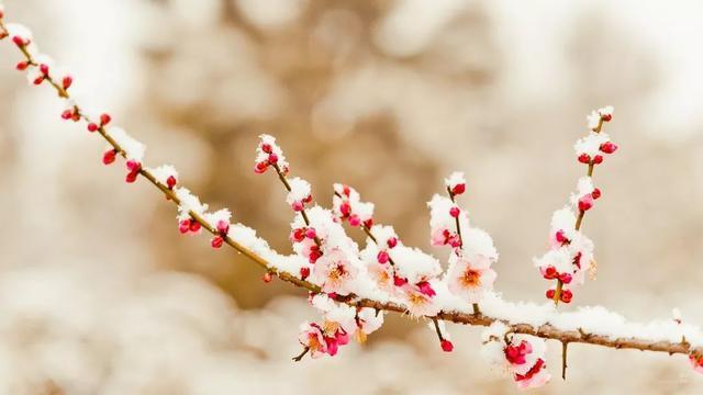 今天的冬至|世界美丽如期到来。 第10张
