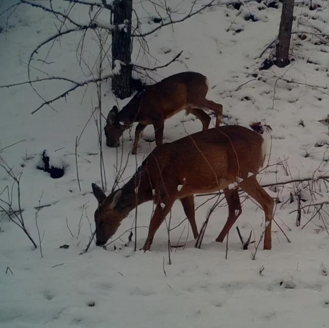 建立自然保护区体系!两位省报记者带你去看《虎豹》 第6张