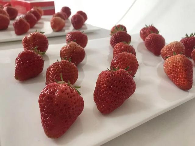 第八届长春市双阳区奢岭草莓温泉旅游节开幕。 第3张