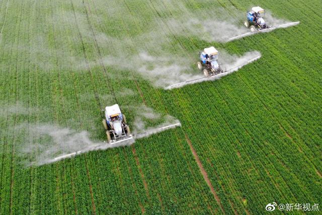 虫口夺粮,今年的保丰收计划来了。 第1张